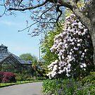 Springtime at Glasgow Botanic Gardens by ElsT