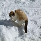YUK! More Snow! by MaeBelle