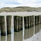 Wooden breakwaters on the beach in Nieuw Haamstede Zeeland by 7horses