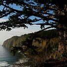 CAPE LOOKOUT OREGON by RoseMarie747