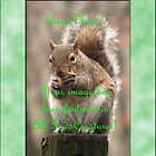 Banner AGC Squirrel Feature by aprilann