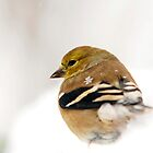 White Gold American Goldfinch by Christina Rollo