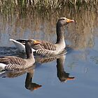 A Proud Pair Of Geese by Jazzdenski