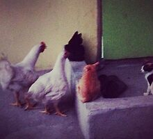 Chickens vs. Cats by ronfulness