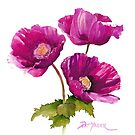 Purple Poppies for your ipad! by Pat Yager