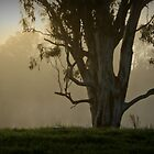 Early morning mist by myraj
