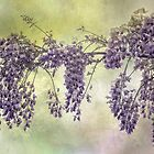 Wisteria Wonder by Dianne English