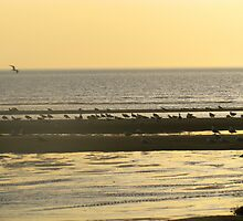 Birds and the beach by GleaPhotography