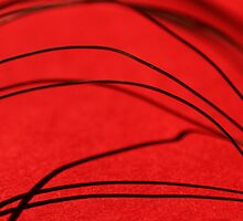 Red - Wire & Shadow by KM-Photography