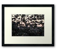 Cherry Blossom (Digital Aquarell)  Framed Print