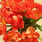 Red Tulips by Vanella Mead