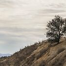 Lonely Tree On A Cloudy Day by heatherfriedman
