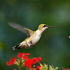 Summer Hummingbird by Christina Rollo