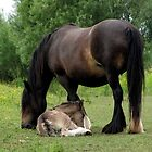 Clydesdale Mare And Foal by Oldetimemercan