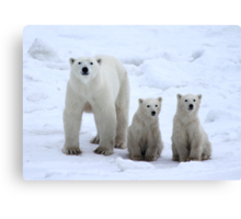 Family Portrait #1 - Polar Bears, Churchill, Canada Canvas Print