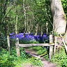 Entrance to the Bluebell Wood by hootonles