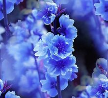 Blue Delphinium by Artisimo