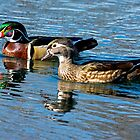 Wood ducks out for a swim by imagetj