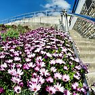 Lyme Regis In Bloom by Susie Peek