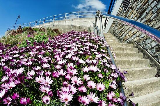 Lyme Regis In Bloom by Susie Peek