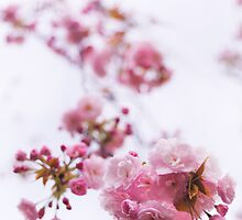 Closeup of pink cherry blossom art photo print by ArtNudePhotos