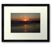 Seagulls Landing At Dawn Framed Print