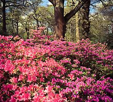 Isabella Plantation, Richmond Park by Ludwig Wagner