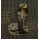 Snake iPad Case by flashcompact