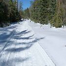 Trail to Our Cabin, April 16 2014 by MaeBelle