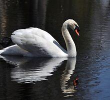 The Swan of my dreams... by Poete100
