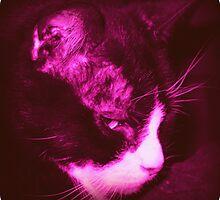 My Cranky Cat - Vintage by PiscesAngel17