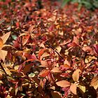 spring bush with red, yellow color leaves. by naturematters