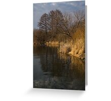 Golden Afternoon Reflections Greeting Card