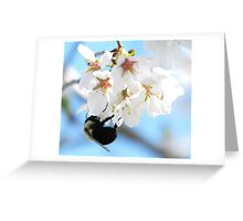 Bumble Bee In The Apple Blossoms Greeting Card