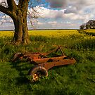 Tree, trailor and rape field. by naranzaria