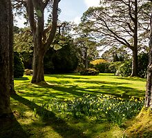Muckross, Killarney, Ireland by Susan Browne
