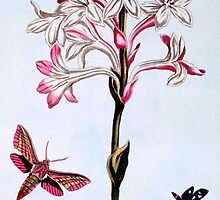 Tuberose by Bridgeman Art Library