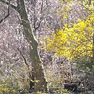 Spring Colors, Van Vorst Park, Jersey City, New Jersey by lenspiro