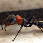 ©NS Single Ant IAT by OmarHernandez