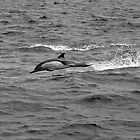 Dolphin Breaching Out by damhotpepper