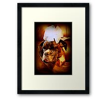 Boxer Dog With Blue Bow Framed Print