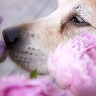 Smell the flowers by LadyFi