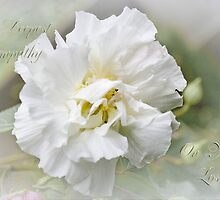 Rose of Sharon by bellecards