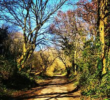 The Path, Centurion Way, Chichester by NPAGE74