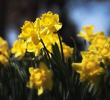 Sunny Spring Day by Susan Kaufman