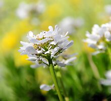 SPRING FLOWERS by PIMPINELLA