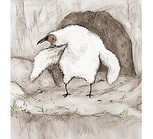 Vulture Chick Photographic Print