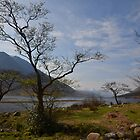 Trees on the shore of Loch Etive by Pete Johnston