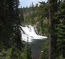 Lewis Falls, Yellowstone National Park by Taryn Halterman