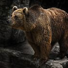 the bear by Jo-PinX